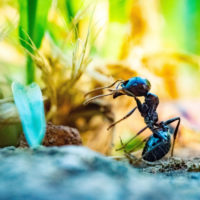 Up-close image of an ant